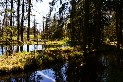 Ze Spáleného Poříčí do brdských lesů a zpět