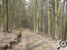 Smíšený les v okolí Otavy sestávající z modřínů, smrků, borovic, habrů a lip