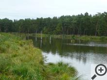 Jeden z Novodvorských rybníků