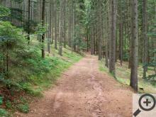Od České Čermné pokračuje krásná lesní cesta