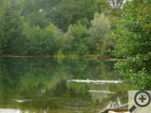 Jezero Poděbrady je překvapivě čisté a celkem velké, jsou tu hezké písčité pláže i skrytá romantická zákoutí a voda je tak průhledná, že ryby lze pozorovat přímo ze břehu